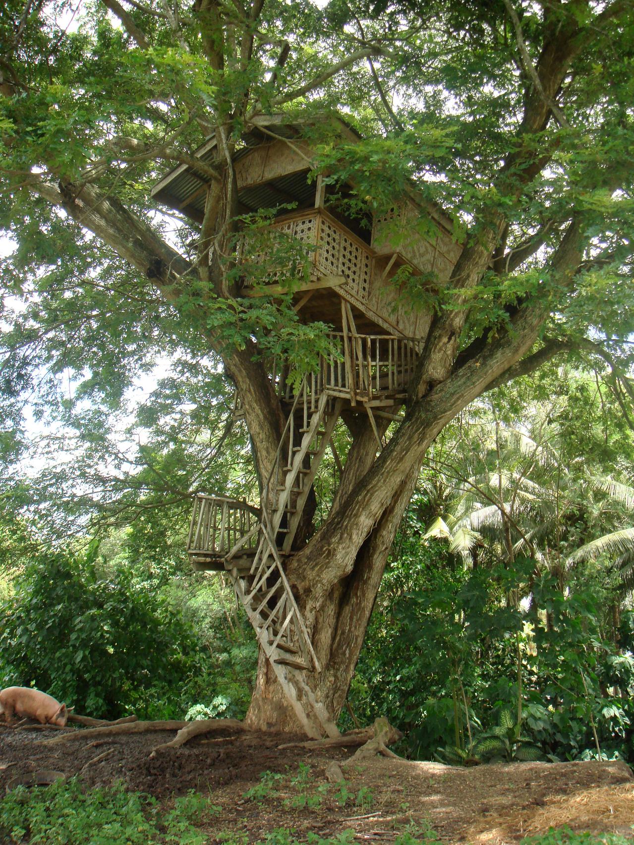 broken-treehouse-1578715-1279x1705